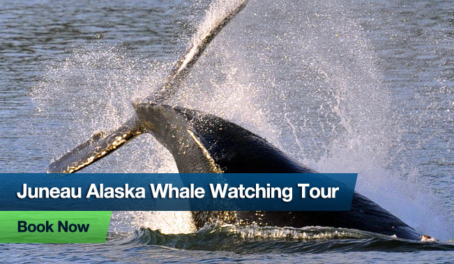 Alaska Whale Watching Tour