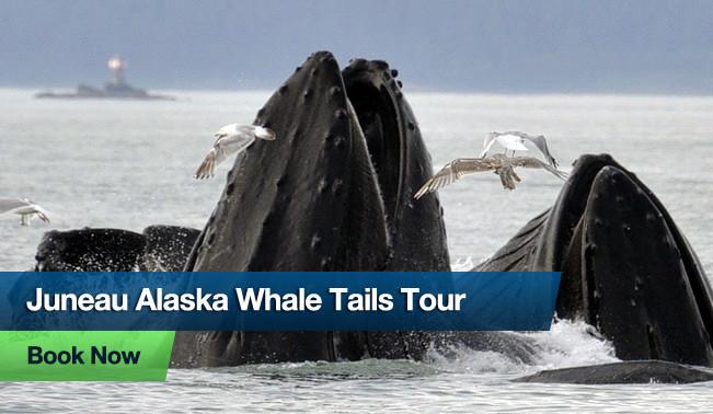 Juneau Alaska Whale Tails Tour